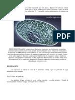 PROTOZOOS12.doc