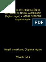 TRABAJO DE DIFERENCIACIÓN DE MUESTRAS DE NOGAL AMERICANO 2