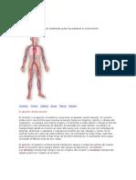 Corason Cardio Vascular
