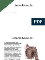 Sistema Muscular (2)