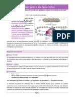 10. Transcripción en eucariotasss