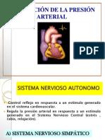 cardiovascular Regulación de la presión arterial - Sistema venoso - 2012