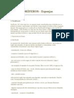 Poriferos - Esponjas