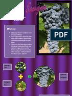 Wine Varietal Fact Sheet