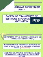 Transporte de Eletrons e Sintese de ATP