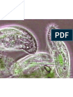 Potensi Protozoa