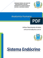 Sistema_Endócrino