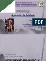 Anatomia Y Embriología del Aparato Urinario (1)
