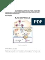 BIOLOGI (Oogenesis)
