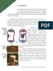 The Evolution of Amphibians