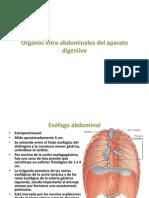 Órganos Intra Abdominales del Aparato Digestivo