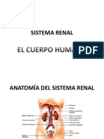 Prof. Barrios Biol 103 Anatomia y Fisiologia Generalidades Sistema Renal