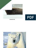 Arctic Food Chain