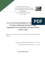 Evaluacion de Tres Variedades de Frijol (Vigna unguiculata) en El Municipio Guanare Del Estado Portuguesa