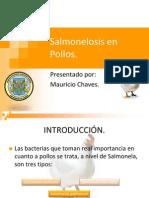 Salmonelosis en Pollos