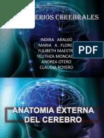 HEMISFERIOS CEREBRALES (1)