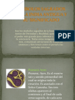 Simbolos Sagrados de La India Antigua y Su Significado