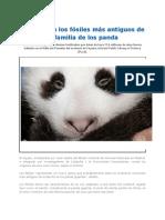 Los_fósiles_más_antiguos_de_la_familia_de_los_panda