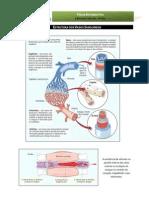 CN9 - Estrutura dos vasos sanguíneos