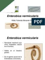Enterobius vermicularis-2011