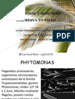 Phitomonas y Marchitez Sorpresiva en Palma