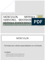 Músculos, sistema nervoso, sentidos e sistema