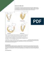 Miocardiopatias Clasificcion OMS _AHA