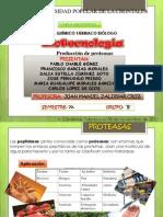 proteasa BIOTECNOLOGIA