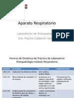 Respiratorio.práctica.LHP