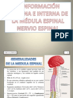 Medula y Nervio Espinal