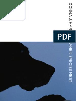 Night Wolf Gazing HP Design Printed Needlepoint Canvas E#283