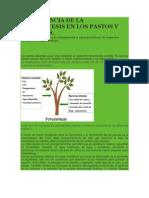 Importancia de La Fotosintesis en Los Pastos y Forrajes