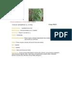 identificação de plantas daninhas