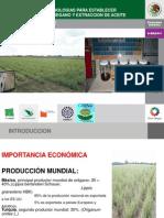 2.Tecnicas y Tecnologias Para Establecer Plantaciones de Oregano y Extraccion de Aceite - Copia