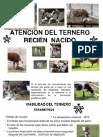 ATENCIÓN DEL TERNERO RECIÉN  NACIDO