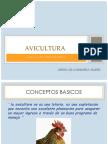 Presentacion Avicultura - Gallina Ponedora