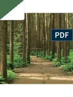 908 foresta final r