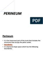 PERINEUM and Urogenital Triangle (Lect 18-11)