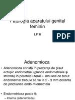LP Genital Fem