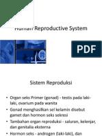 Sistem Reproduksi (Translate)