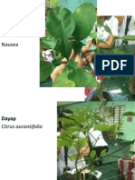 Pot Plants Glycosides