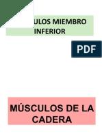 MUSCULOS MIEMBRO INFERIORdejuan