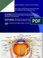 1.4 Anatomia Ojos-1