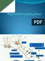 Reproduksi Pada Jamur