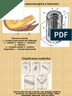 Structura macroscopică a lemnului