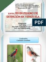 ESPECIES EN PELIGRO DE EXTINCIÓN EN VENEZUELA