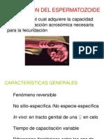 Clase Capacitacion (ME00-11) ESPERMATOO