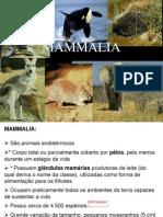 Mammalia Parte 1