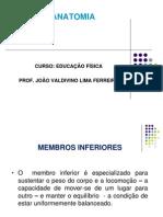 ANATOMIA AULA 4- EDUCAÇÃO FÍSICA