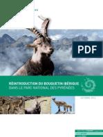 Rapport Du Bouquetin Iberique